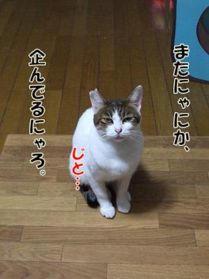 2011_10060002.jpg