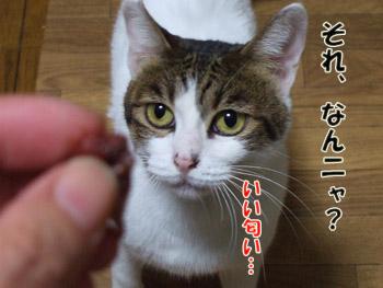 2011_10060020.jpg