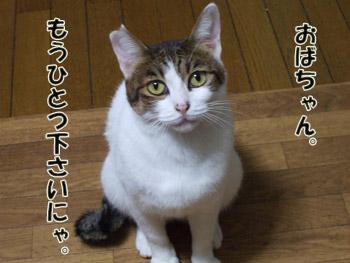 2011_10060027.jpg