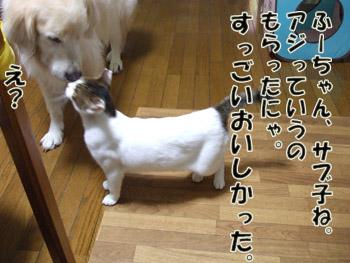 2011_10060030.jpg
