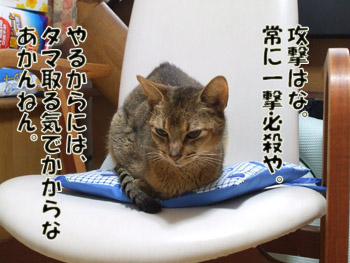 2011_10100004_20111020214537.jpg