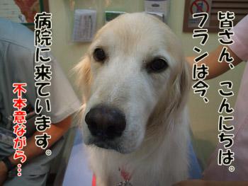 2011_10120013.jpg