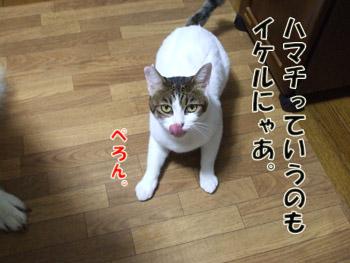 2011_10120059.jpg