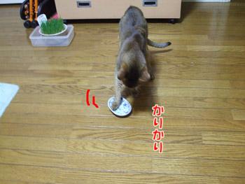 2011_10120072.jpg