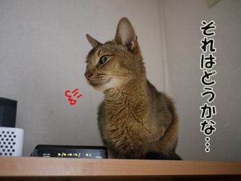 2011_10160003.jpg