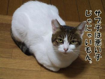 2011_10180001.jpg