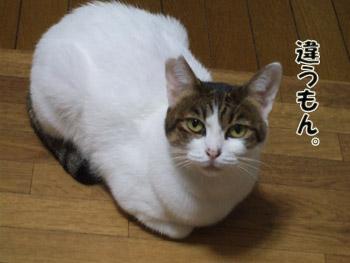 2011_10180002.jpg