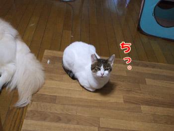 2011_10180003.jpg