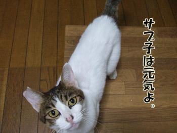 2011_10240003.jpg
