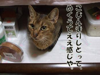 2011_10260023.jpg