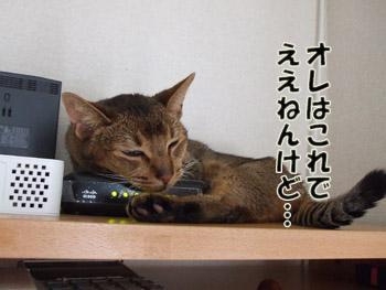 2011_11020006.jpg
