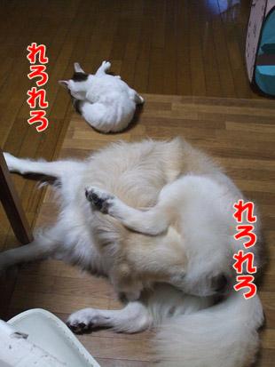 2011_11030025.jpg