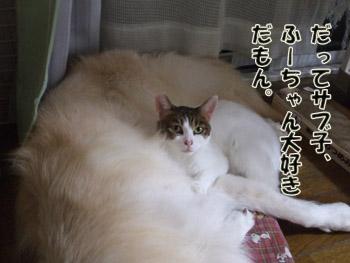 2011_11030037.jpg