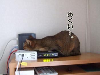 2011_11080003.jpg