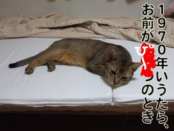 DSCF5097_20101008143252.jpg