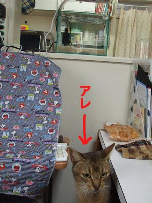 are_20101128222026.jpg
