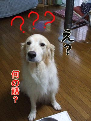 nani_20100902105837.jpg