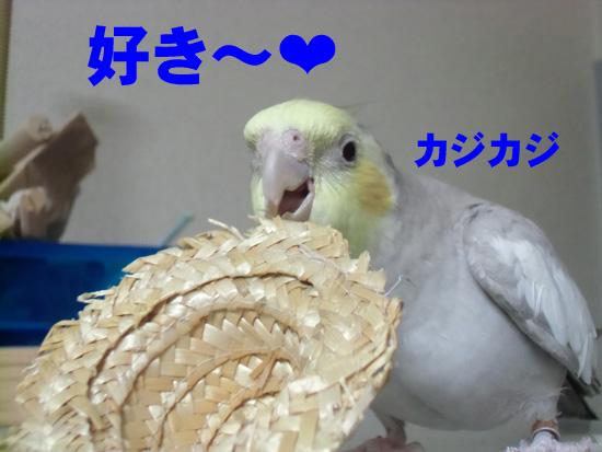 かじるの!?