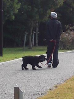 お父さんと散歩2
