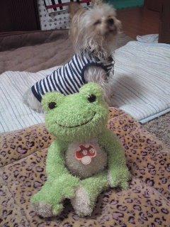 カエルさんとチョロ^^