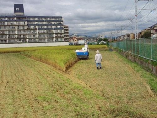 20141009稲刈り③