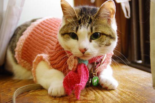 セーターとマフラー