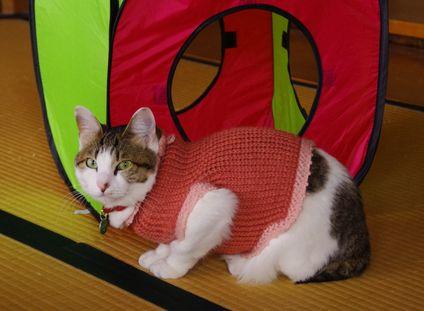 セーター似合うの