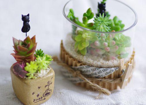 ネコと多肉植物