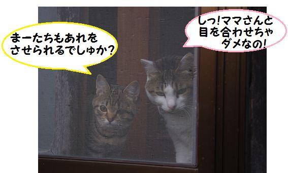 窓辺の2にゃん