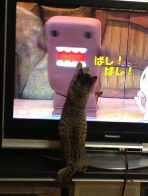 テレビ好き~