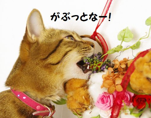 食べましゅ