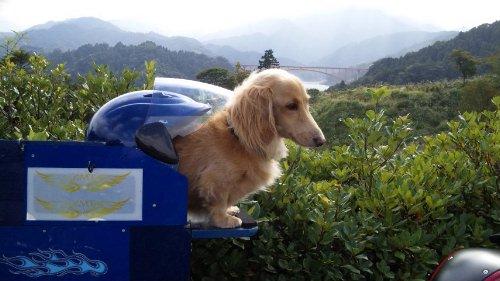 10・12癒し犬02
