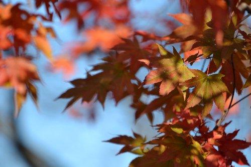 20111029志賀草津③