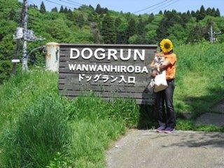 ドッグラン入口