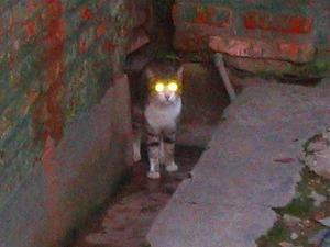 新種の猫 (2)