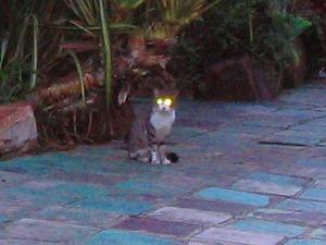 新種の猫 (1)