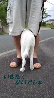 散歩チャン1