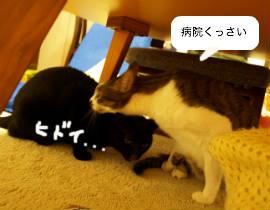 omioko120416_2.jpg