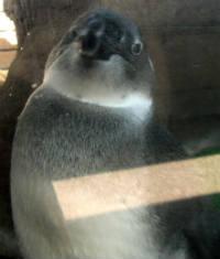 penguin2012.jpg
