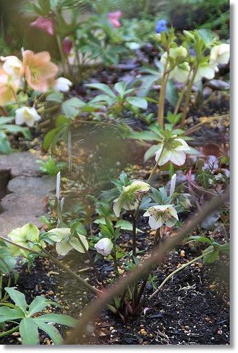 クリロー花壇 1