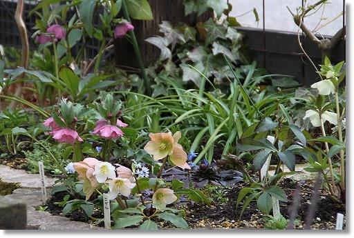 クリロー花壇 2