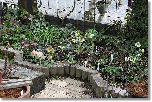 クリロー花壇 3