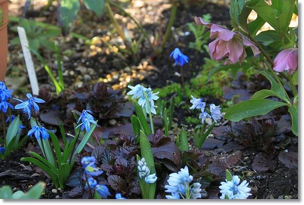 花壇 小さな花 1