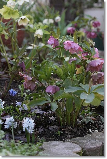 クリロー花壇と小さな花 1