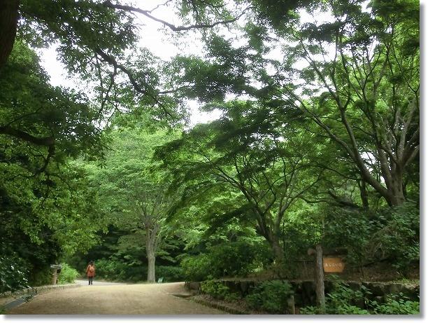 神戸森林植物園 1