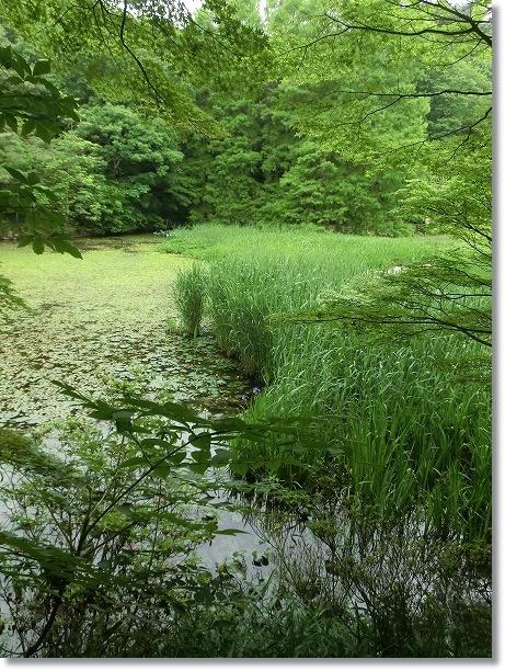神戸森林植物園 2