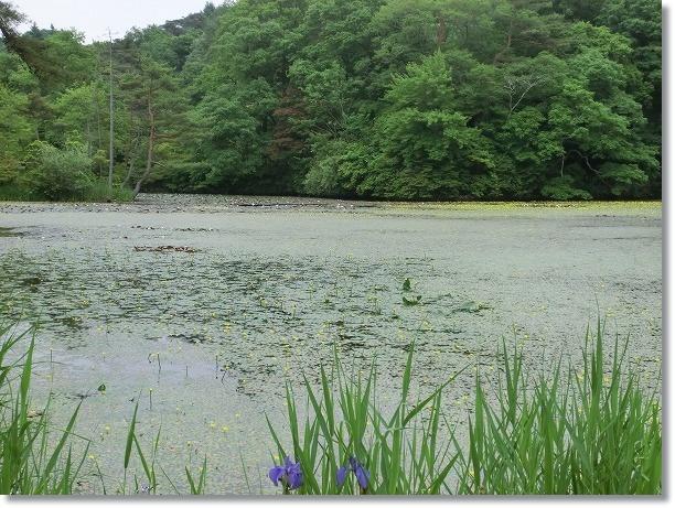 神戸森林植物園 3