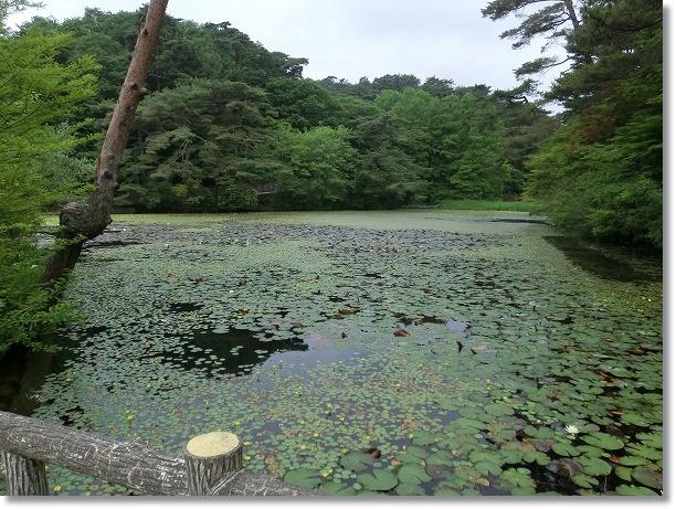神戸森林植物園 4