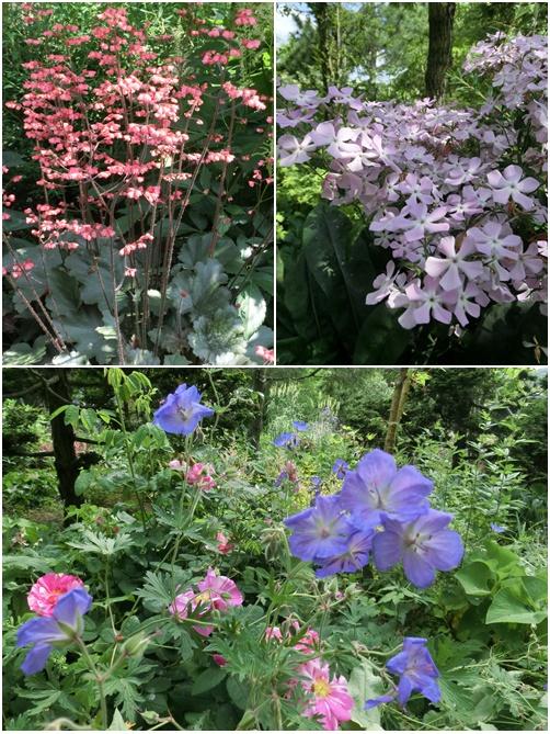 植花夢の花 1
