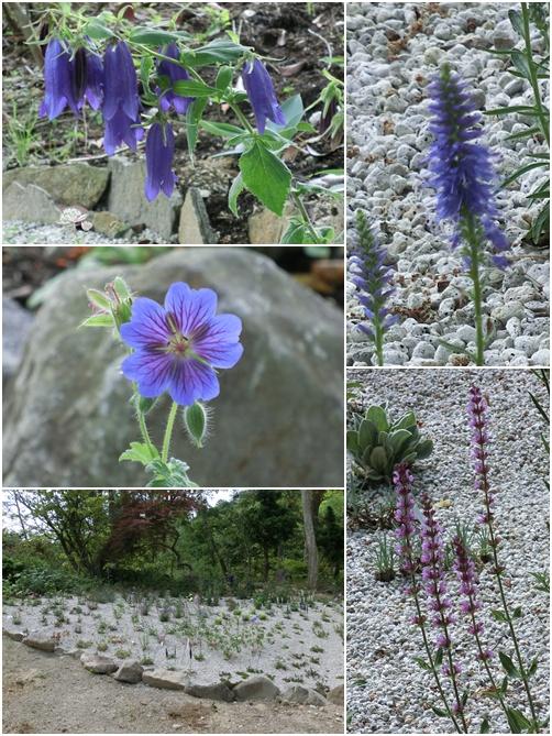 植花夢の花 2